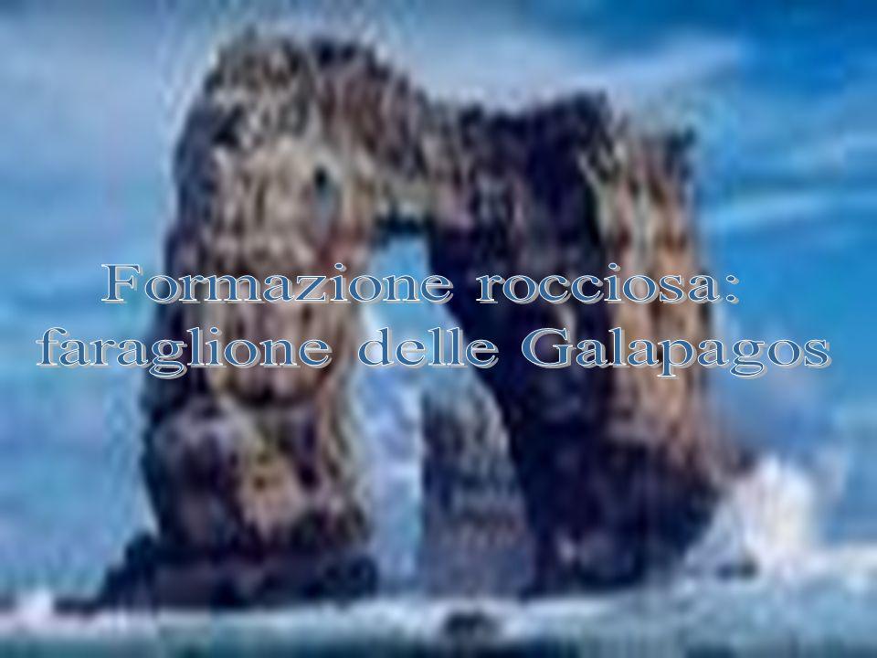 Questo rapace fu trovato successivamente, dai vari studiosi che si occuparono dell arcipelago, praticamente in tutte le isole dello stesso, soprattutto da quando tali ricerche divennero organiche e continuate grazie all istituzione nel 1959 della Charles Darwin Foundation per le isole Galápagos, avvenuta sotto gli auspici dell UNESCO, dell IUCN e del governo dell Ecuador, sotto la cui giurisdizione ricadono le isole.