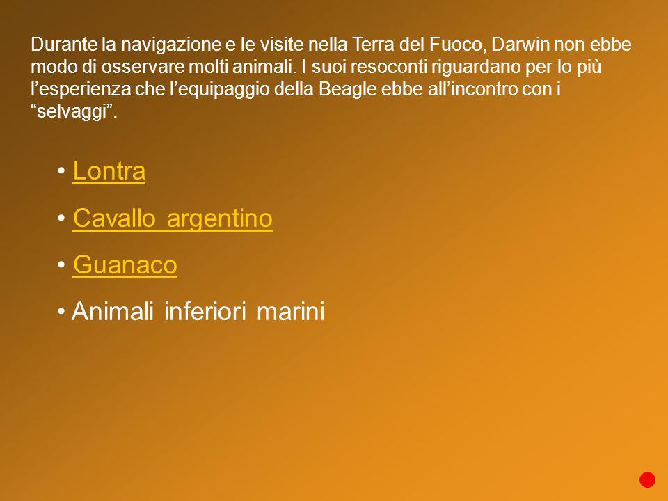 Lontra Cavallo argentino Guanaco Animali inferiori marini Durante la navigazione e le visite nella Terra del Fuoco, Darwin non ebbe modo di osservare