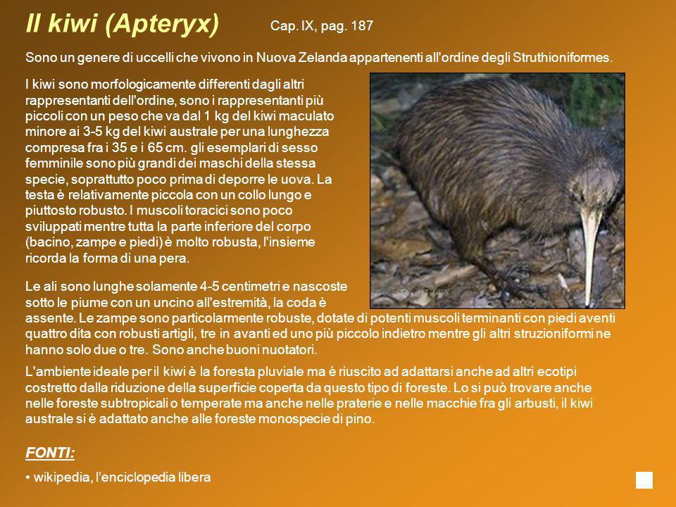 Il kiwi (Apteryx) Sono un genere di uccelli che vivono in Nuova Zelanda appartenenti all'ordine degli Struthioniformes. I kiwi sono morfologicamente d