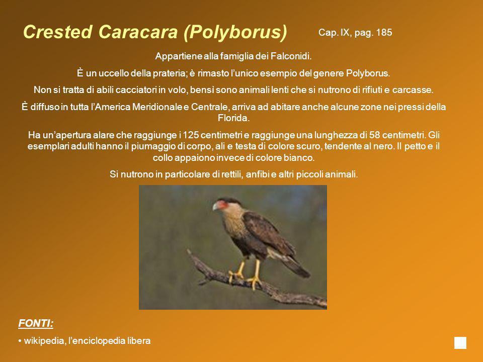 Crested Caracara (Polyborus) Appartiene alla famiglia dei Falconidi. È un uccello della prateria; è rimasto lunico esempio del genere Polyborus. Non s