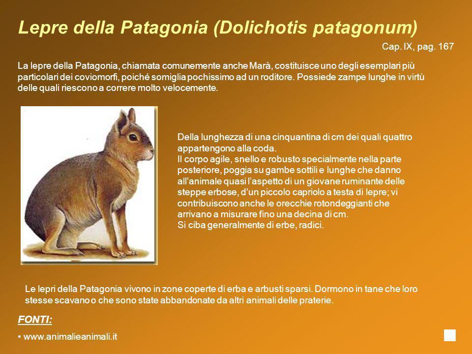 Lepre della Patagonia (Dolichotis patagonum) La lepre della Patagonia, chiamata comunemente anche Marà, costituisce uno degli esemplari più particolar