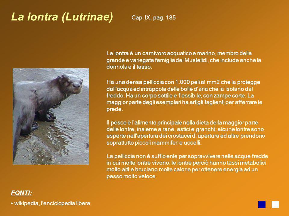 La lontra (Lutrinae) La lontra è un carnivoro acquatico e marino, membro della grande e variegata famiglia dei Mustelidi, che include anche la donnola