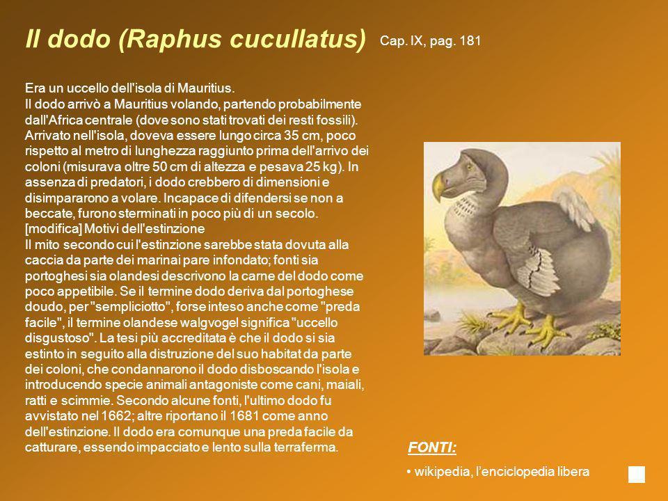 Il dodo (Raphus cucullatus) Era un uccello dell'isola di Mauritius. Il dodo arrivò a Mauritius volando, partendo probabilmente dall'Africa centrale (d