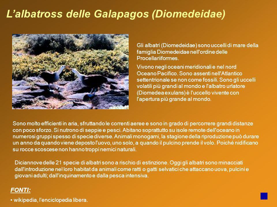 Lalbatross delle Galapagos (Diomedeidae) Gli albatri (Diomedeidae) sono uccelli di mare della famiglia Diomedeidae nell'ordine delle Procellariiformes