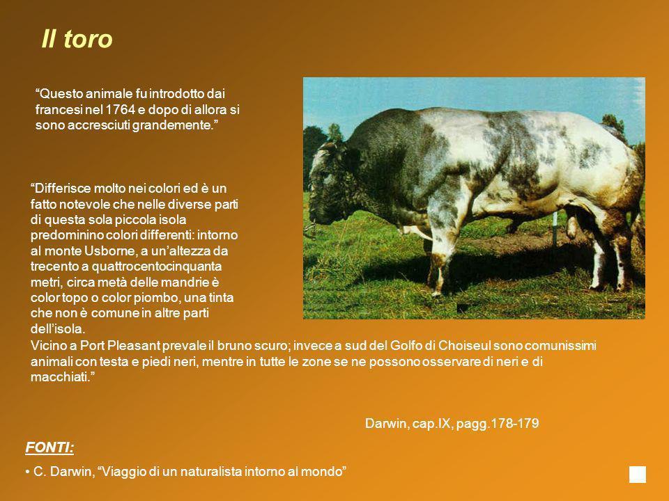 Il toro Questo animale fu introdotto dai francesi nel 1764 e dopo di allora si sono accresciuti grandemente. Vicino a Port Pleasant prevale il bruno s