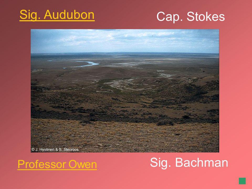 Cap. Stokes Sig. Bachman Sig. Audubon Professor Owen