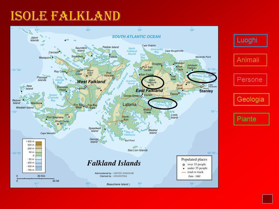 Isole Falkland Luoghi Animali Persone Geologia Piante
