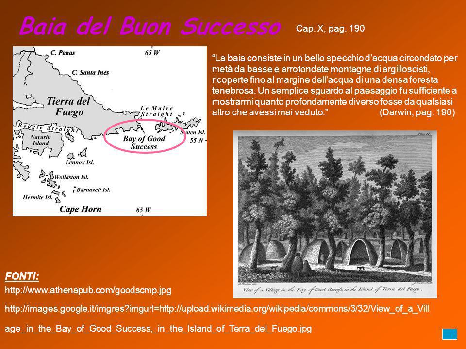 Baia del Buon Successo http://www.athenapub.com/goodscmp.jpg http://images.google.it/imgres?imgurl=http://upload.wikimedia.org/wikipedia/commons/3/32/View_of_a_Vill age_in_the_Bay_of_Good_Success,_in_the_Island_of_Terra_del_Fuego.jpg FONTI: Cap.