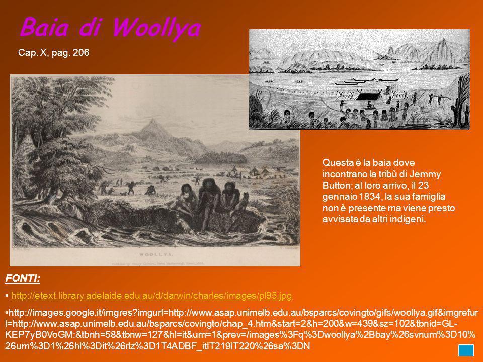 Baia di Woollya FONTI: http://etext.library.adelaide.edu.au/d/darwin/charles/images/pl95.jpg http://images.google.it/imgres?imgurl=http://www.asap.uni