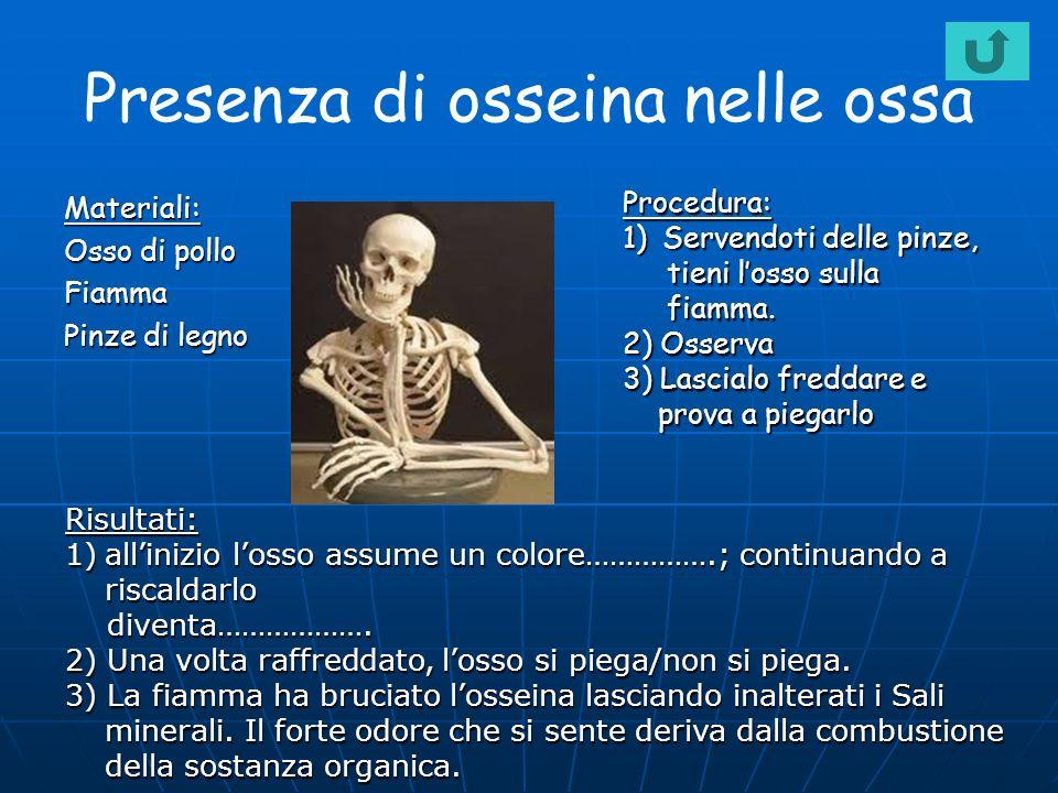 Presenza di osseina nelle ossa Materiali: Osso di pollo Fiamma Pinze di legno Procedura: 1)Servendoti delle pinze, tieni losso sulla tieni losso sulla