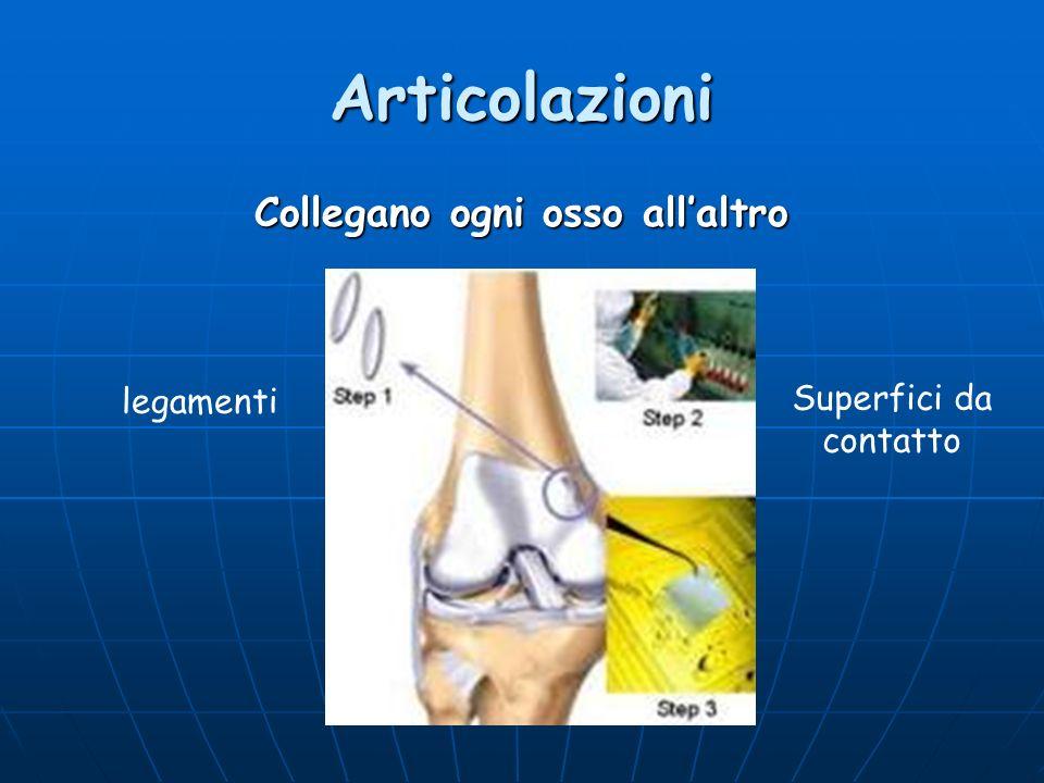 Articolazioni Collegano ogni osso allaltro legamenti Superfici da contatto
