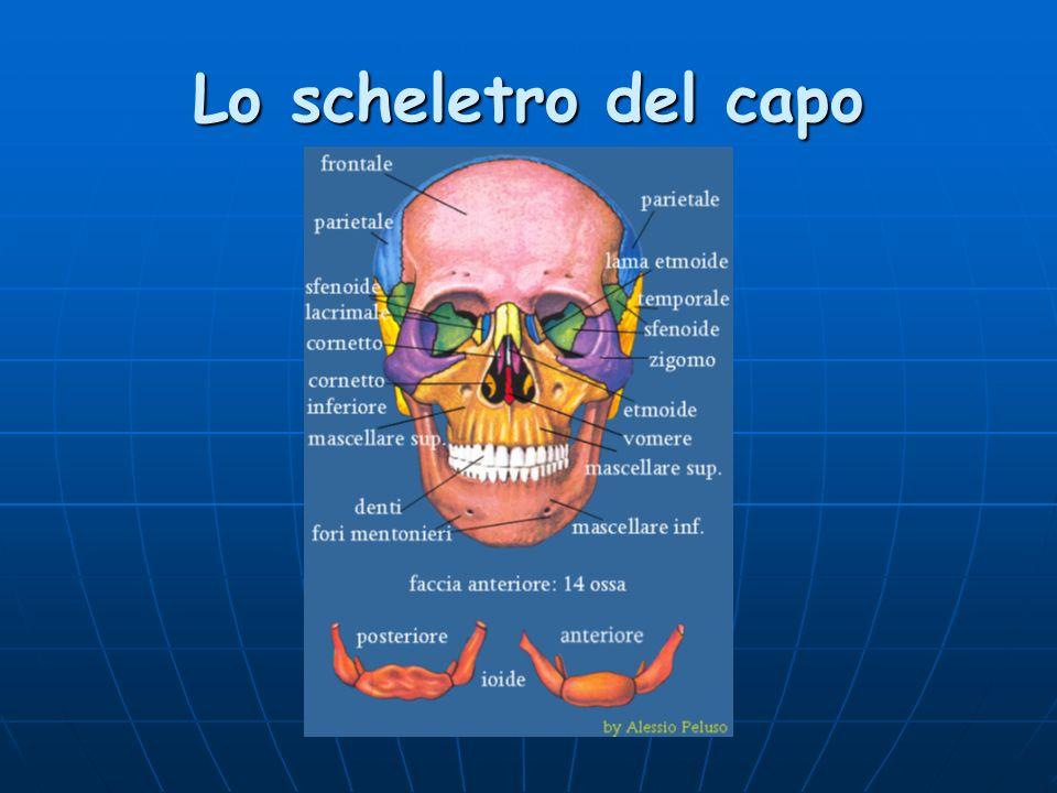 Lo scheletro del capo
