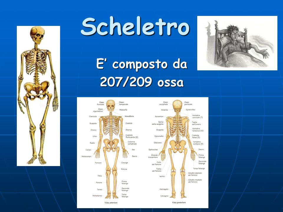Scheletro Cartilagine: costituita da sostanze organiche.
