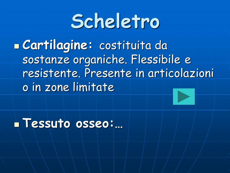 Scheletro Cartilagine: costituita da sostanze organiche. Flessibile e resistente. Presente in articolazioni o in zone limitate Cartilagine: costituita