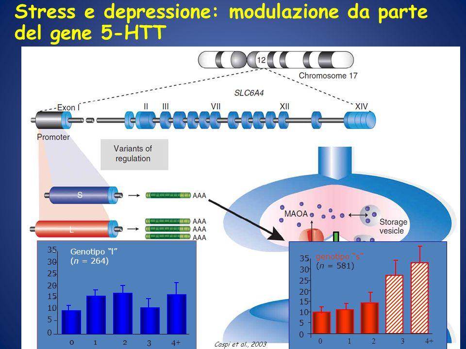 Genotipo l (n = 264) 0 5 10 15 20 25 30 35 01234+ Stress e depressione: modulazione da parte del gene 5-HTT 01234+ genotipo s (n = 581) 0 5 10 15 20 2
