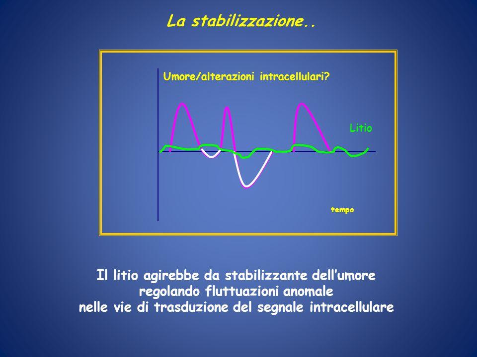La stabilizzazione.. Il litio agirebbe da stabilizzante dellumore regolando fluttuazioni anomale nelle vie di trasduzione del segnale intracellulare U