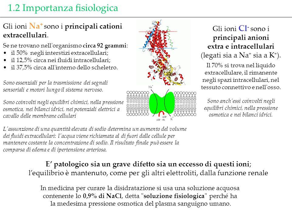 1.2 Importanza fisiologica Gli ioni Cl - sono i principali anioni extra e intracellulari (legati sia a Na + sia a K + ). Il 70% si trova nel liquido e