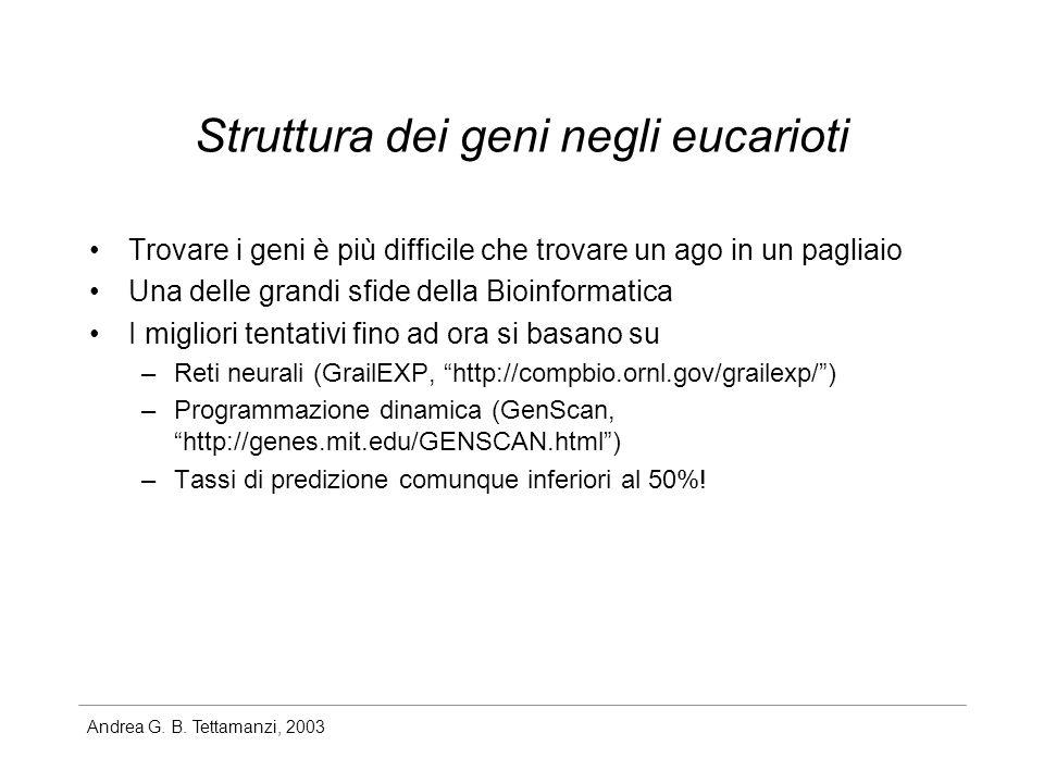 Andrea G. B. Tettamanzi, 2003 Struttura dei geni negli eucarioti Trovare i geni è più difficile che trovare un ago in un pagliaio Una delle grandi sfi