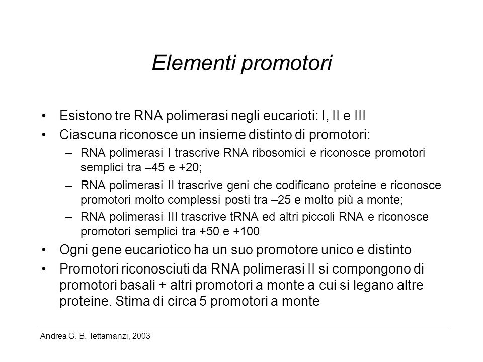 Andrea G. B. Tettamanzi, 2003 Elementi promotori Esistono tre RNA polimerasi negli eucarioti: I, II e III Ciascuna riconosce un insieme distinto di pr