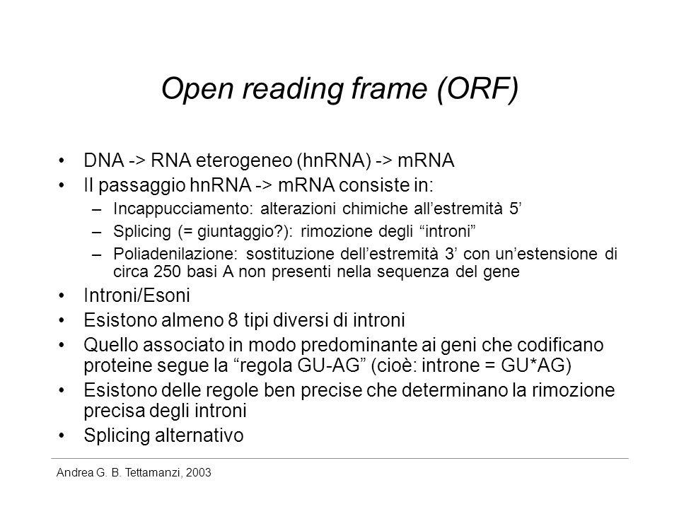 Andrea G. B. Tettamanzi, 2003 Open reading frame (ORF) DNA -> RNA eterogeneo (hnRNA) -> mRNA Il passaggio hnRNA -> mRNA consiste in: –Incappucciamento