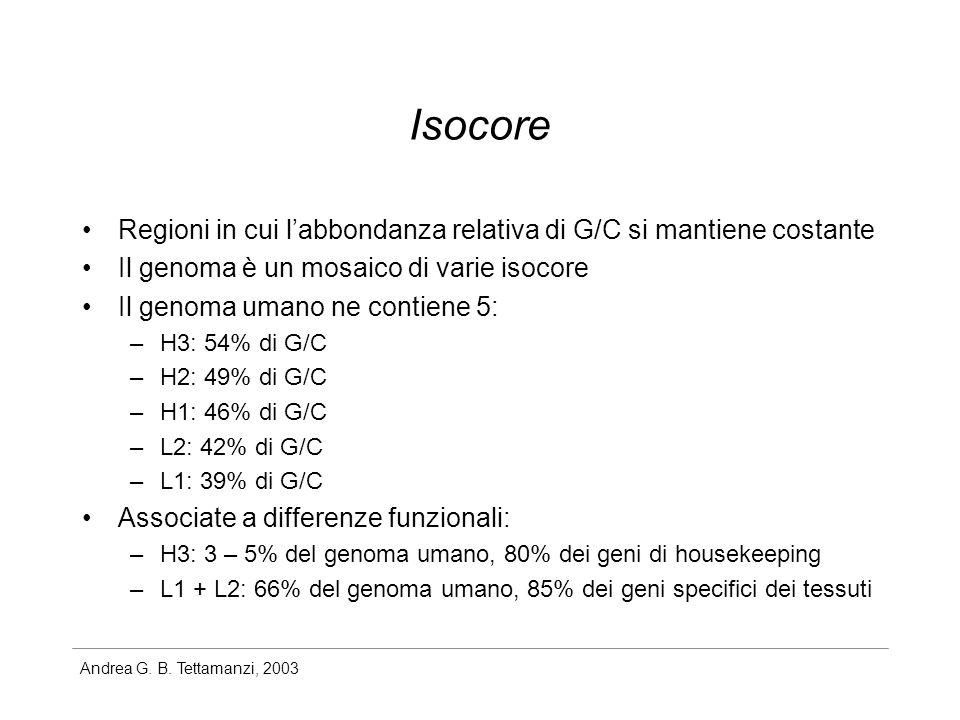 Andrea G. B. Tettamanzi, 2003 Isocore Regioni in cui labbondanza relativa di G/C si mantiene costante Il genoma è un mosaico di varie isocore Il genom