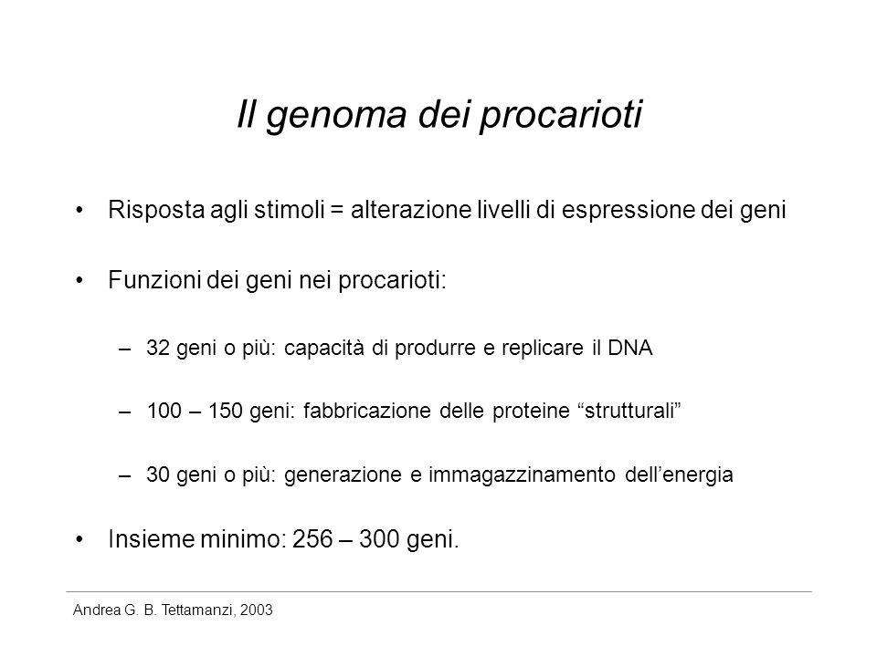 Andrea G. B. Tettamanzi, 2003 Il genoma dei procarioti Risposta agli stimoli = alterazione livelli di espressione dei geni Funzioni dei geni nei proca