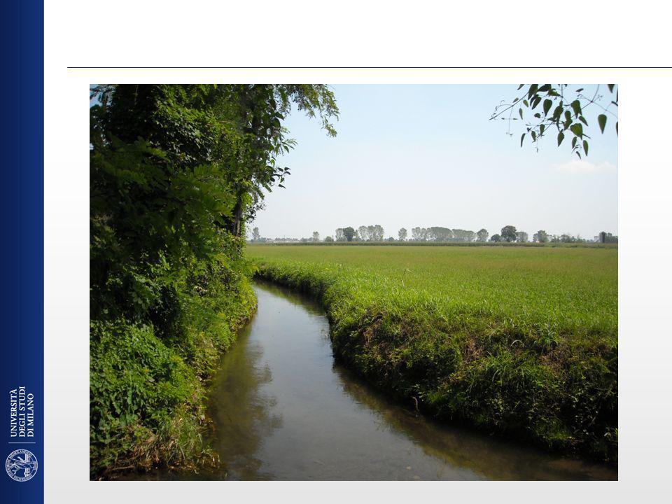 Efficienza del sistema suolo-coltura Aumentare lefficienza duso dei fertilizzanti da parte delle colture agrarie Utilizzo di piante come bioindicatori per ottimizzare la fertilizzazione e per la indicazione dei danni (Ozono) Sviluppo di tecniche per aumentare laccumulo e stoccaggio nei suoli di CO 2