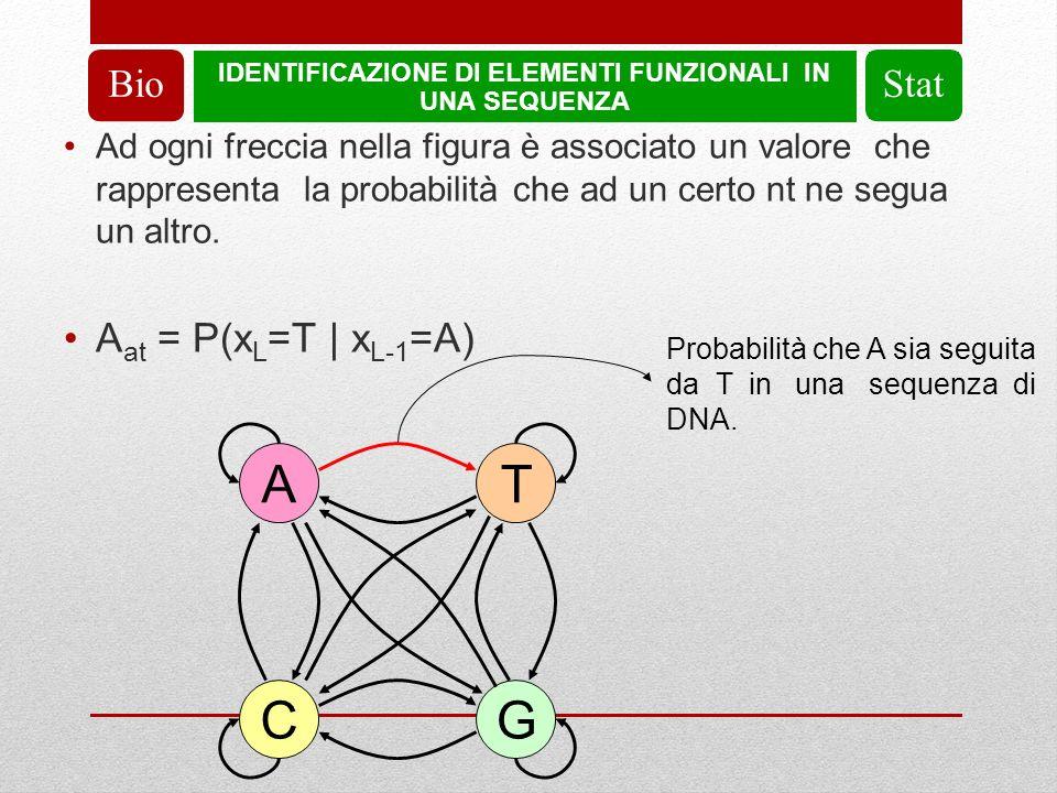 IDENTIFICAZIONE DI ELEMENTI FUNZIONALI IN UNA SEQUENZA BioStat Ad ogni freccia nella figura è associato un valore che rappresenta la probabilità che ad un certo nt ne segua un altro.