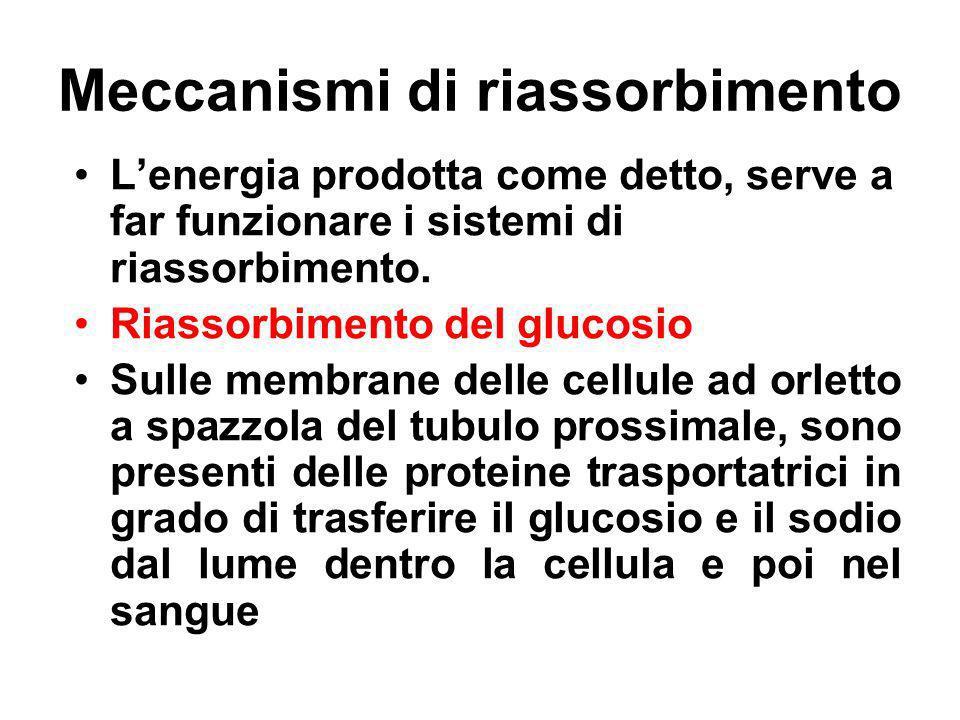 Meccanismi di riassorbimento Lenergia prodotta come detto, serve a far funzionare i sistemi di riassorbimento. Riassorbimento del glucosio Sulle membr