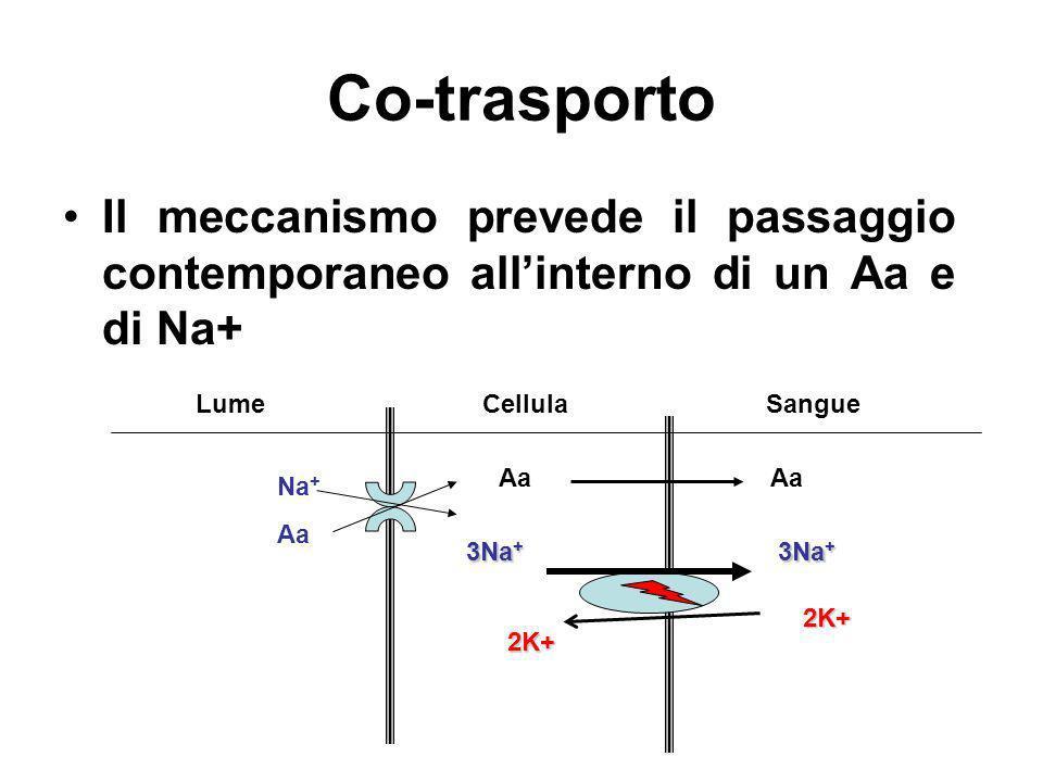 Co-trasporto Il meccanismo prevede il passaggio contemporaneo allinterno di un Aa e di Na+ LumeCellulaSangue Na + Aa 3Na + 2K+2K+