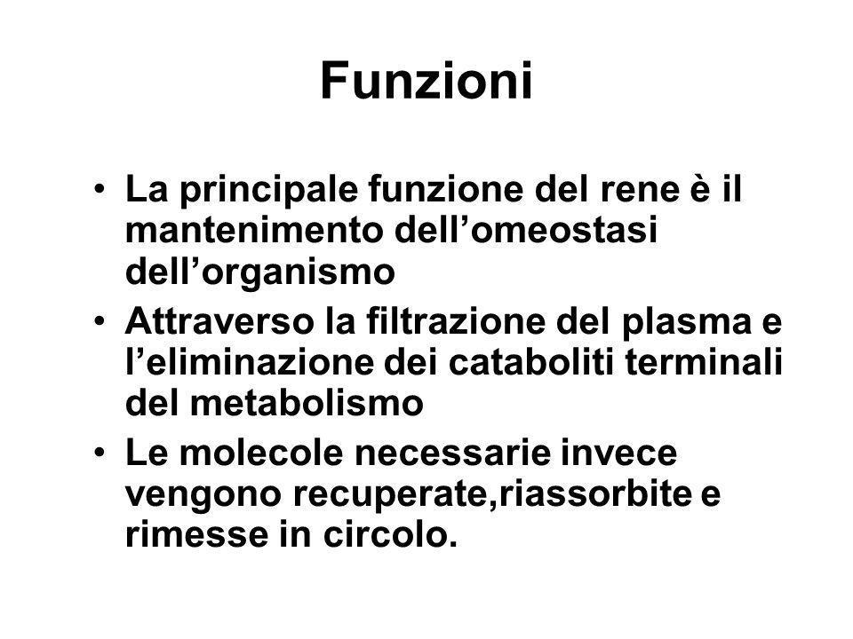 Funzioni La principale funzione del rene è il mantenimento dellomeostasi dellorganismo Attraverso la filtrazione del plasma e leliminazione dei catabo