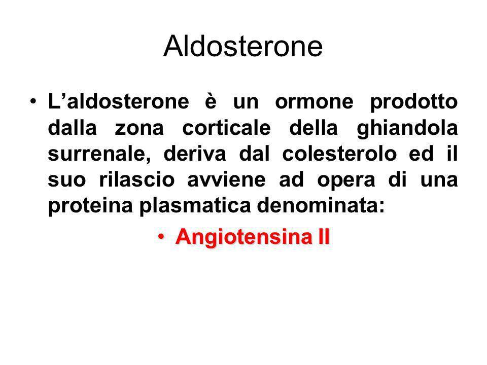 Aldosterone Laldosterone è un ormone prodotto dalla zona corticale della ghiandola surrenale, deriva dal colesterolo ed il suo rilascio avviene ad ope
