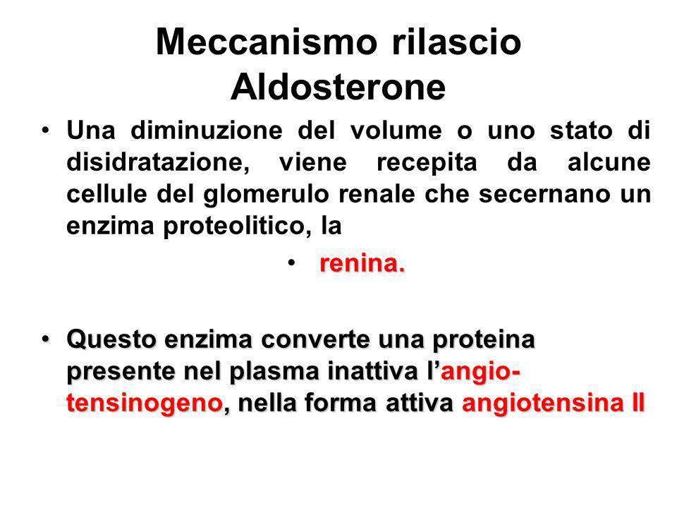 Meccanismo rilascio Aldosterone Una diminuzione del volume o uno stato di disidratazione, viene recepita da alcune cellule del glomerulo renale che se
