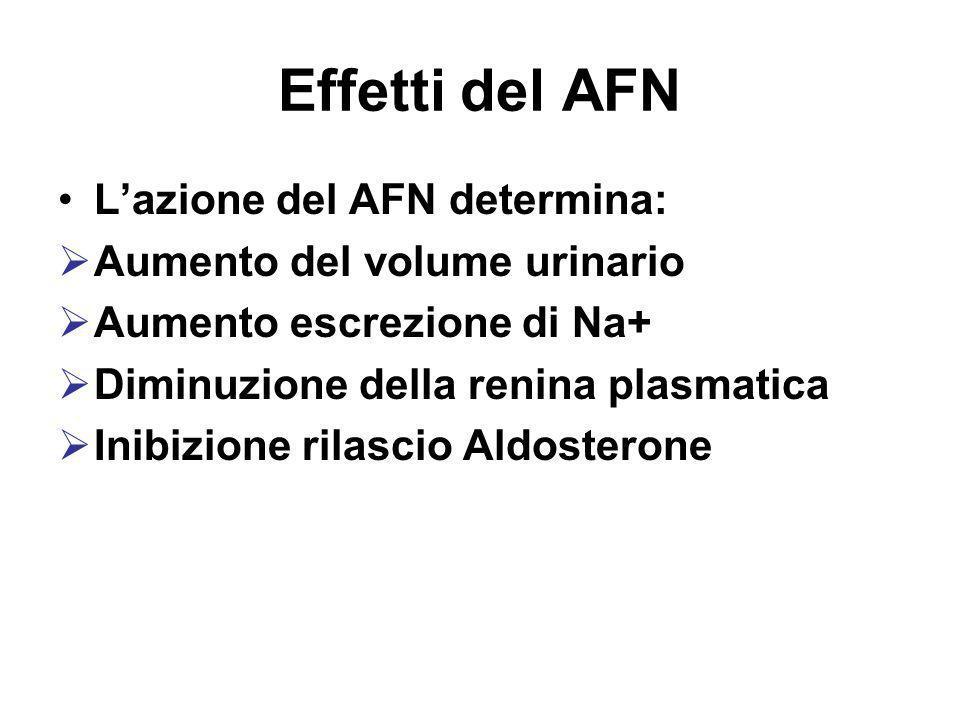 Effetti del AFN Lazione del AFN determina: Aumento del volume urinario Aumento escrezione di Na+ Diminuzione della renina plasmatica Inibizione rilasc