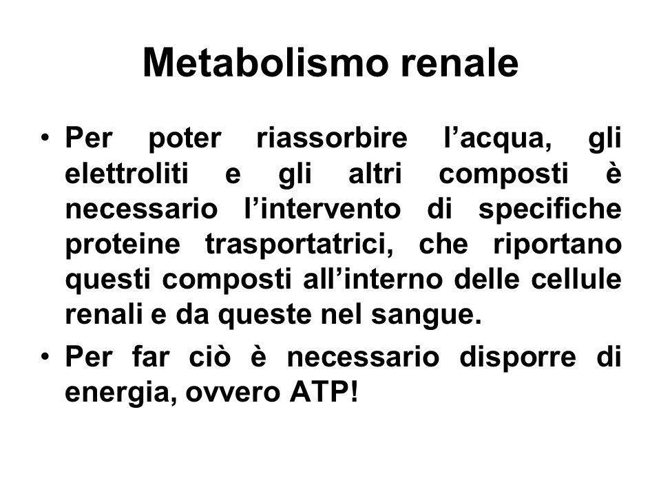 Metabolismo renale Per poter riassorbire lacqua, gli elettroliti e gli altri composti è necessario lintervento di specifiche proteine trasportatrici,