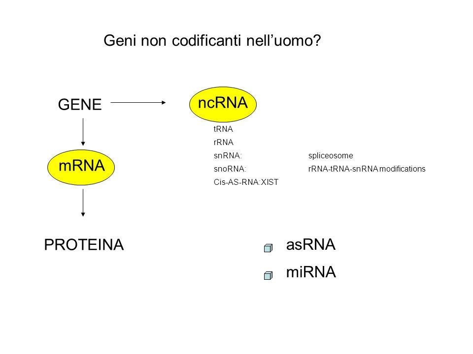 Geni non codificanti nelluomo.
