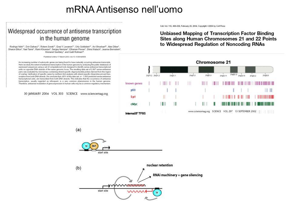 mRNA Antisenso nelluomo