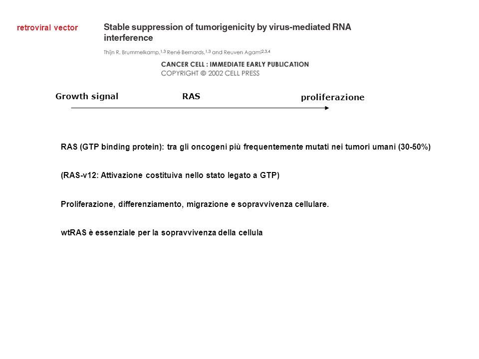 retroviral vector RAS (GTP binding protein): tra gli oncogeni più frequentemente mutati nei tumori umani (30-50%) (RAS-v12: Attivazione costituiva nello stato legato a GTP) Proliferazione, differenziamento, migrazione e sopravvivenza cellulare.