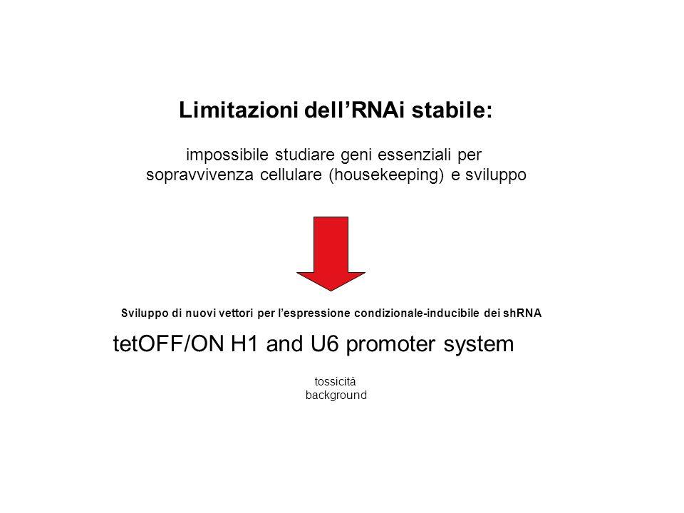 tetOFF/ON H1 and U6 promoter system Limitazioni dellRNAi stabile: impossibile studiare geni essenziali per sopravvivenza cellulare (housekeeping) e sviluppo Sviluppo di nuovi vettori per lespressione condizionale-inducibile dei shRNA tossicità background