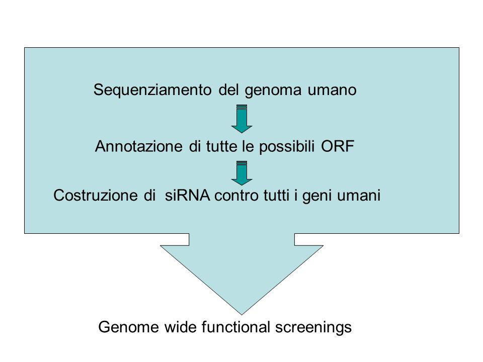 ? Genome wide functional screenings Sequenziamento del genoma umano Annotazione di tutte le possibili ORF Costruzione di siRNA contro tutti i geni umani