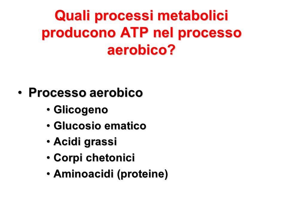 Quali processi metabolici producono ATP nel processo aerobico? Processo aerobicoProcesso aerobico GlicogenoGlicogeno Glucosio ematicoGlucosio ematico