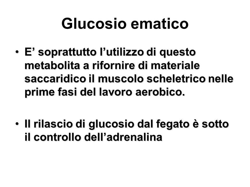 Glucosio ematico E soprattutto lutilizzo di questo metabolita a rifornire di materiale saccaridico il muscolo scheletrico nelle prime fasi del lavoro