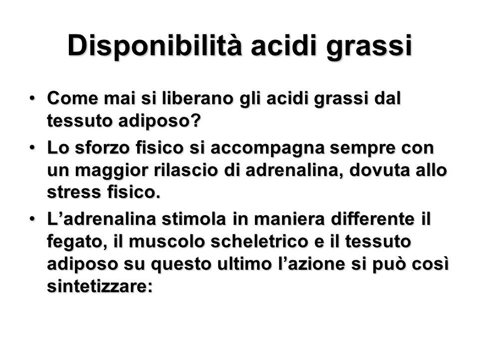 Disponibilità acidi grassi Come mai si liberano gli acidi grassi dal tessuto adiposo?Come mai si liberano gli acidi grassi dal tessuto adiposo? Lo sfo
