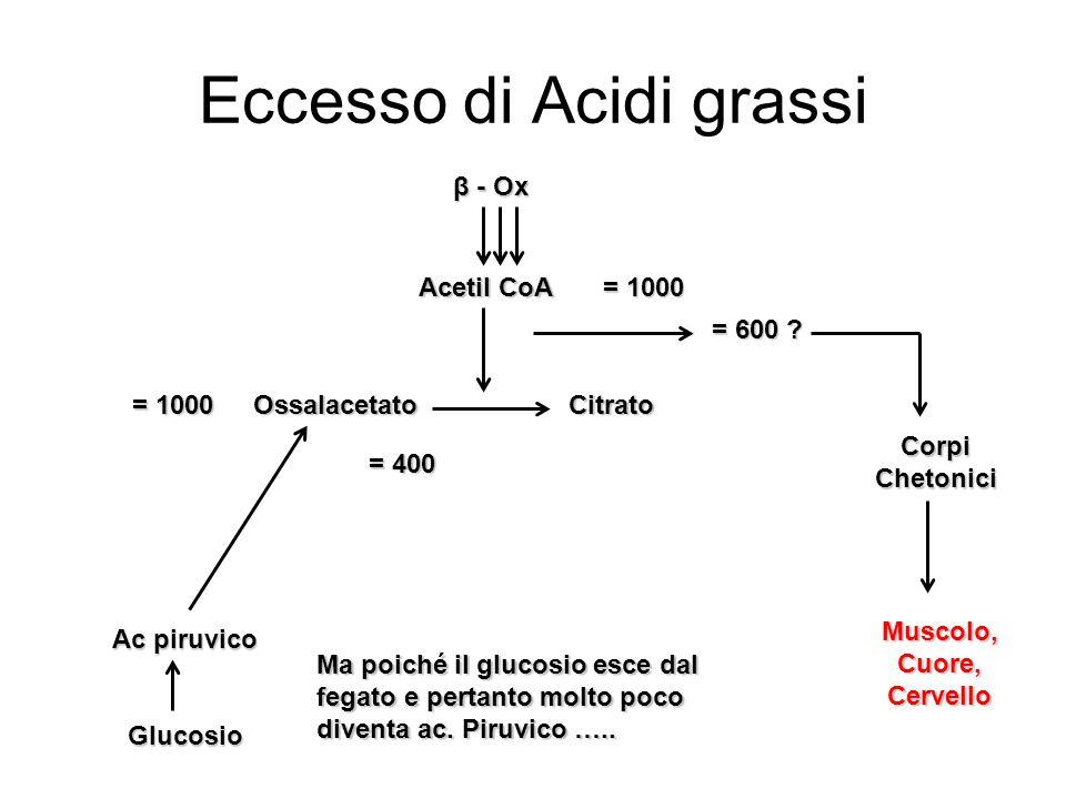 Eccesso di Acidi grassi β - Ox Acetil CoA OssalacetatoCitrato = 1000 Ac piruvico Glucosio = 400 = 600 ? Ma poiché il glucosio esce dal fegato e pertan