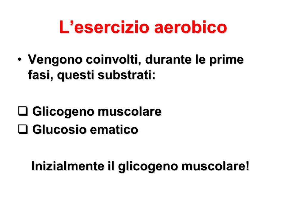 Lesercizio aerobico Vengono coinvolti, durante le prime fasi, questi substrati:Vengono coinvolti, durante le prime fasi, questi substrati: Glicogeno m