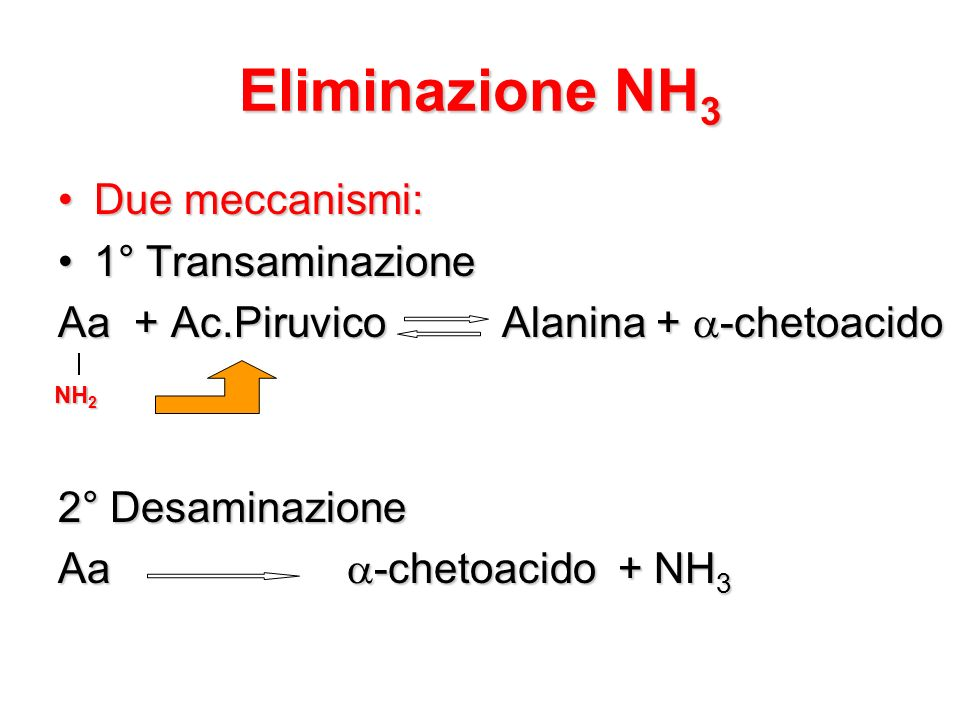 Eliminazione NH 3 Due meccanismi:Due meccanismi: 1° Transaminazione1° Transaminazione Aa + Ac.Piruvico Alanina + -chetoacido 2° Desaminazione Aa -chet