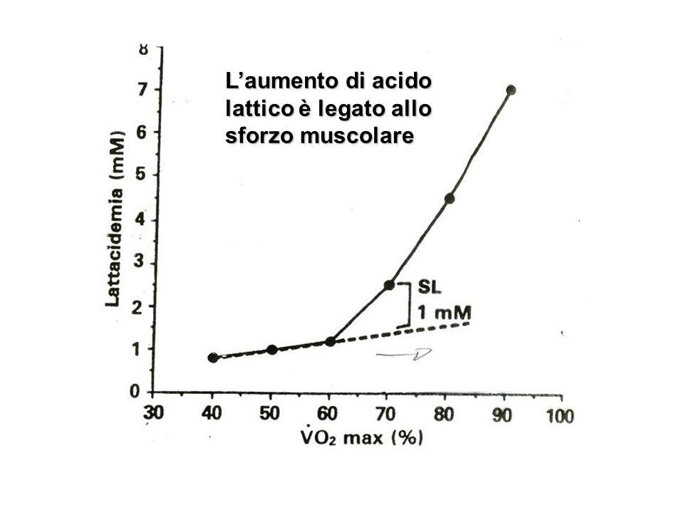 Laumento di acido lattico è legato allo sforzo muscolare