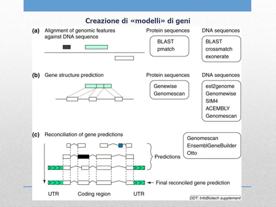 Creazione di «modelli» di geni