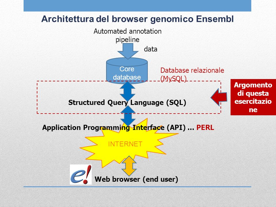 INTERNET Architettura del browser genomico Ensembl Automated annotation pipeline data Core database Database relazionale (MySQL) Structured Query Language (SQL) Application Programming Interface (API) … PERL Web browser (end user) Argomento di questa esercitazio ne