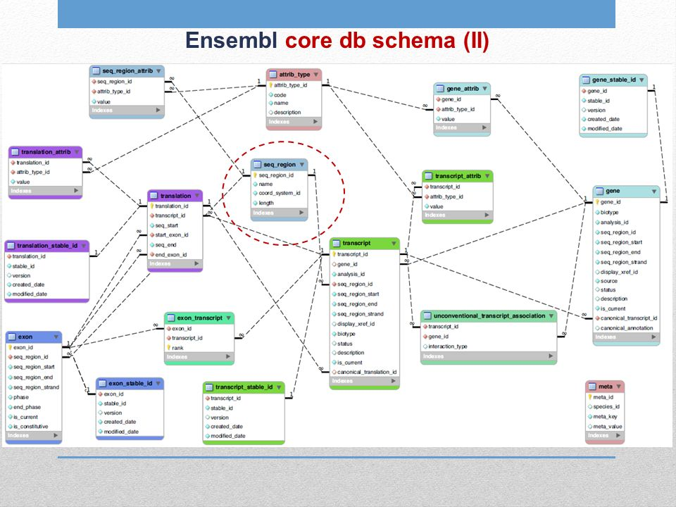 Ensembl core db schema (II)